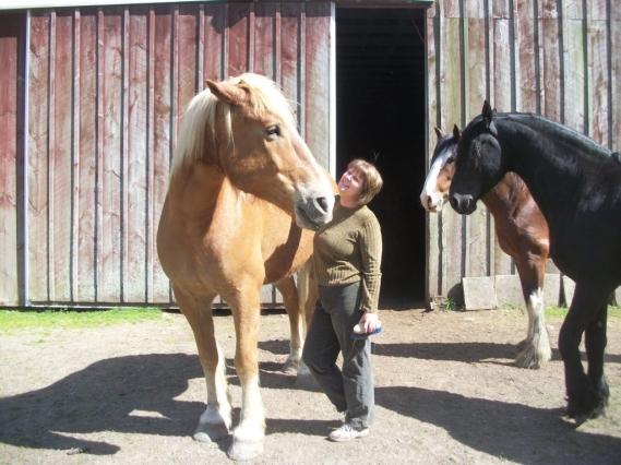 linda__3_horses