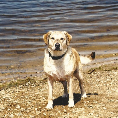 Dom loved to swim!