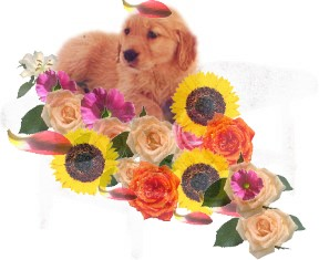 golden-pup-in-flowers-flower-essence