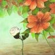 agnes-rose-orange-flowers