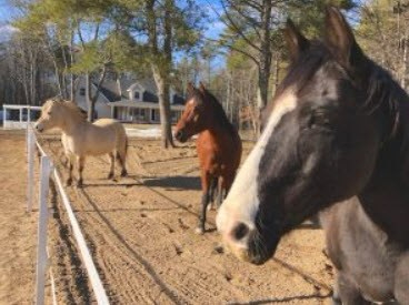 pic close up of Vickie's 3 horses